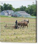 Amish Girl Raking Hay As Painting Acrylic Print