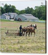 Amish Girl Raking Hay Photo Acrylic Print