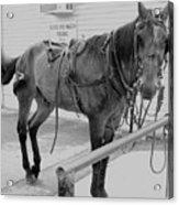 Amish Horse Acrylic Print