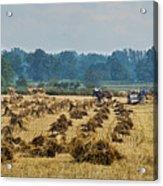 Amish Making Grain Shocks Acrylic Print