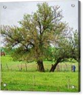 Amish Man And Tree Acrylic Print