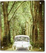 Among Tall Trees Acrylic Print