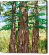 Among The Ferns Acrylic Print