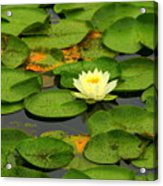 Among The Lily Pads Acrylic Print
