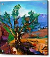 Among The Red Rocks - Sedona Acrylic Print