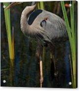 Among The Reeds Acrylic Print