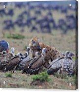 Among The Vultures 1 Acrylic Print