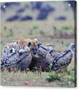 Among The Vultures 2 Acrylic Print