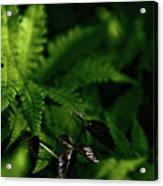Amongst The Fern Acrylic Print