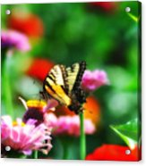 Amongst The Flowers Acrylic Print