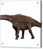 Ampelosaurus On White Acrylic Print