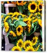Amsterdam Sunflowers Acrylic Print