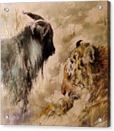 Amur And Timur Acrylic Print