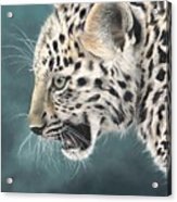 Amur Leopard Cub Acrylic Print