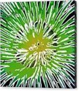 An Abstract Scene Of Sea Anemone 2 Acrylic Print