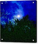 An Affair With Isolation_forest Acrylic Print