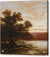 An Australian Mangrove. Ebb Tide Acrylic Print