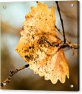 An Autumn Leaf Suspended Acrylic Print