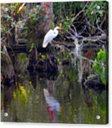 An Egrets World Acrylic Print