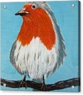 An English Robin Acrylic Print