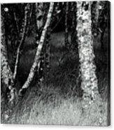 An Irish Copse Acrylic Print