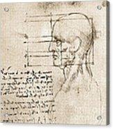 Anatomical Drawing By Leonardo Da Vinci Acrylic Print