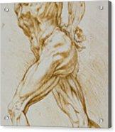 Anatomical Study Acrylic Print