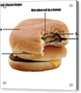 Anatomy Of A Generic Cheese Burger Acrylic Print by Michael Ledray