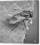 Anatomy Of A Pest - Bw Acrylic Print