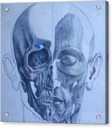 Anatomy Acrylic Print