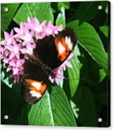 Anchored Down - Butterfly Acrylic Print
