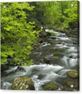 Ancient Cascades In Great Smoky Mountains Acrylic Print