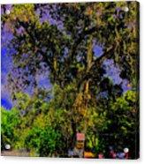 Ancient Oak At Rinconada De Los Gatos S Acrylic Print