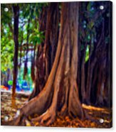 Ancient Roots Of Sicily Acrylic Print