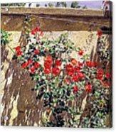Ancient Roses Acrylic Print