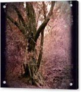 Ancient Tree By A Stream Acrylic Print
