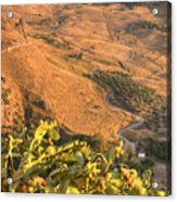 Andalucian Golden Valley Acrylic Print