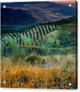 Andalucian Landscape  Acrylic Print