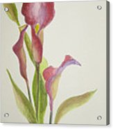 Andy's Calla Lillies Acrylic Print