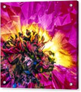 Anemone Abstracted In Fuchsia Acrylic Print