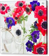 Anemone Flowers  Acrylic Print