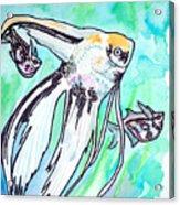 Angel Fish And Hatchet Tetras Acrylic Print by Jenn Cunningham