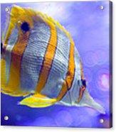 Angel Fish Acrylic Print