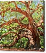 Angel Oak - Charleston Sc  Acrylic Print by Drew Castelhano