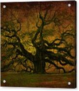Angel Oak 3 Charleston Acrylic Print