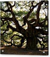 Angel Oak In November Acrylic Print