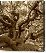 Angel Oak In Sepia Acrylic Print
