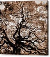 Angel Oak Johns Island Sc Acrylic Print