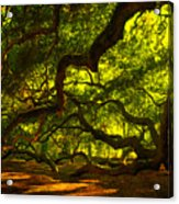 Angel Oak Limbs 2 Acrylic Print by Susanne Van Hulst