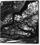 Angel Oak Limbs Bw Acrylic Print
